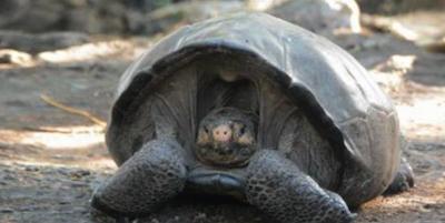 La tortuga Fernanda
